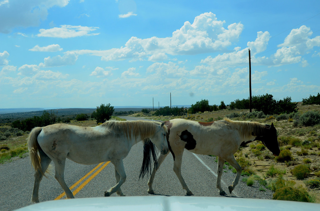 Open range exits along much of the roads to Chaco.