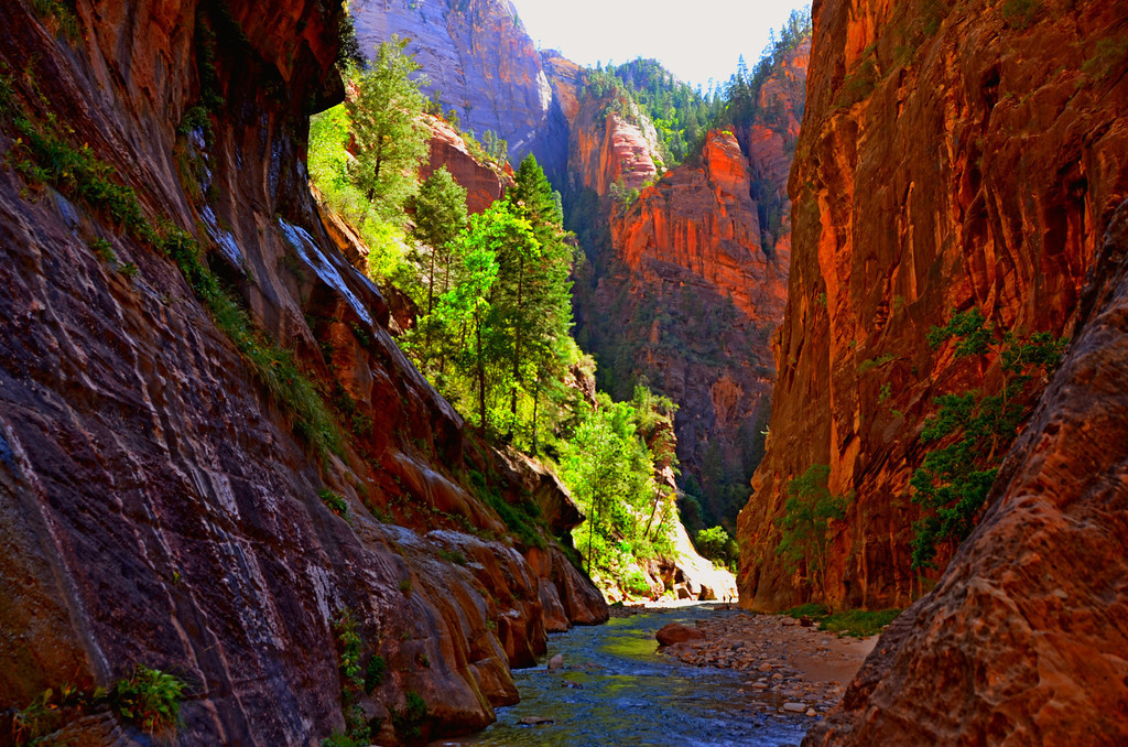The Narrows<br /> <br /> Light filtering through the pines against the canyon walls is stunning.