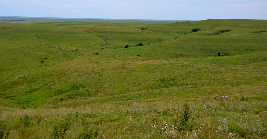 The wild mustangs that have been relocated here are visible everywhere you look in the distant hills.