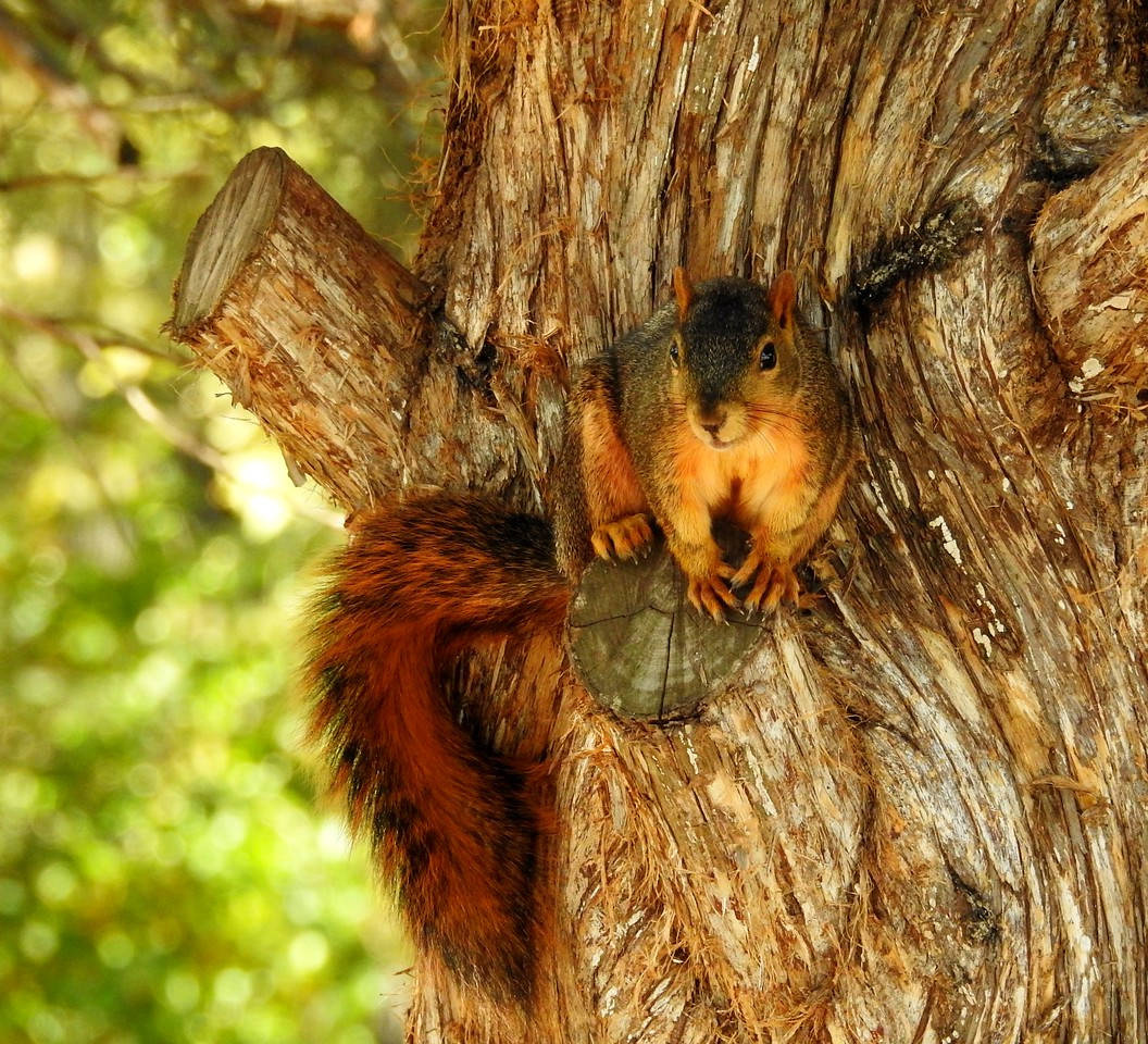 Millstream Resort Hotel in Cottonwood Falls proves to be a favorite with the squirrels.