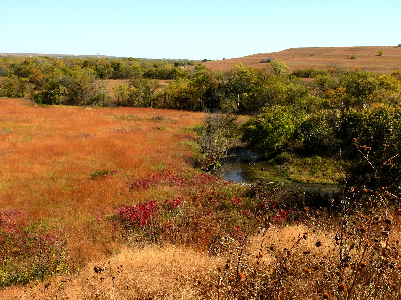Fall means that the Prairie grasses turn to beautiful pastel colors.