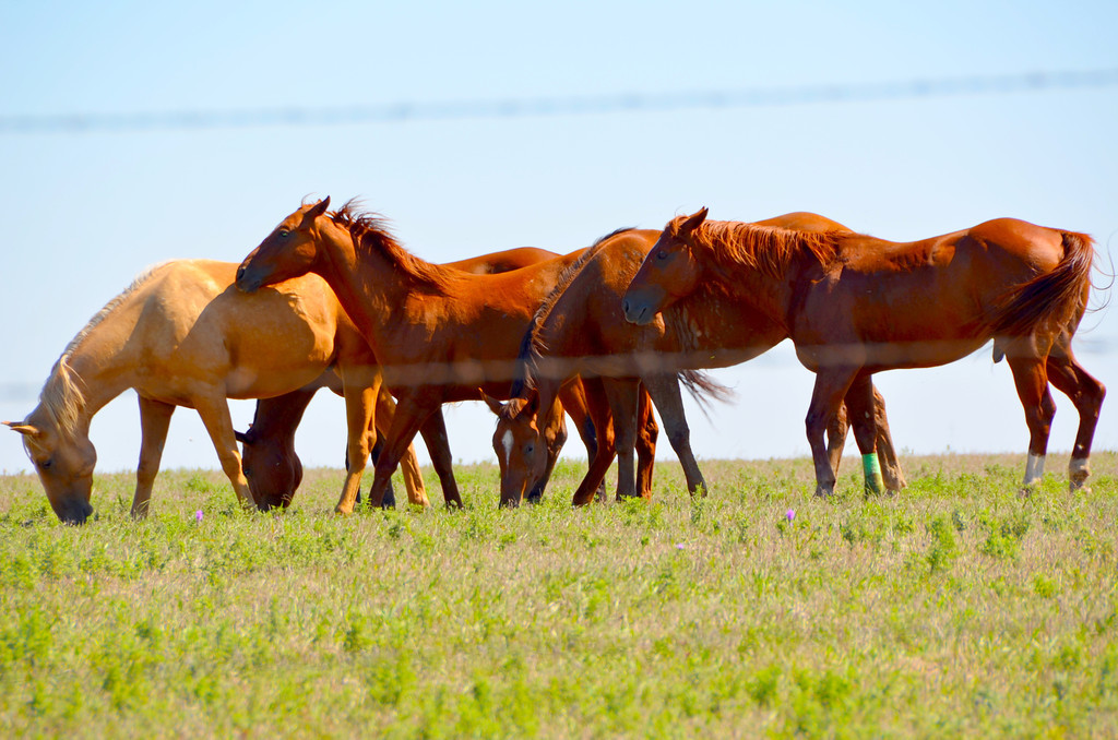 Horses look at home and happy in Chase Country pastures.