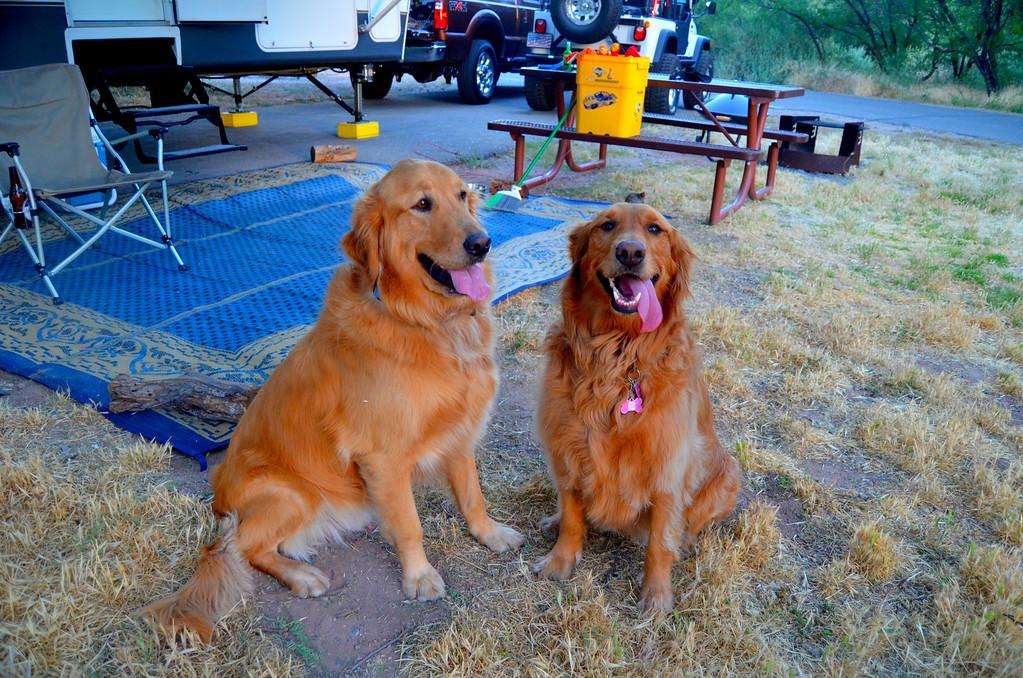 Campground buddies