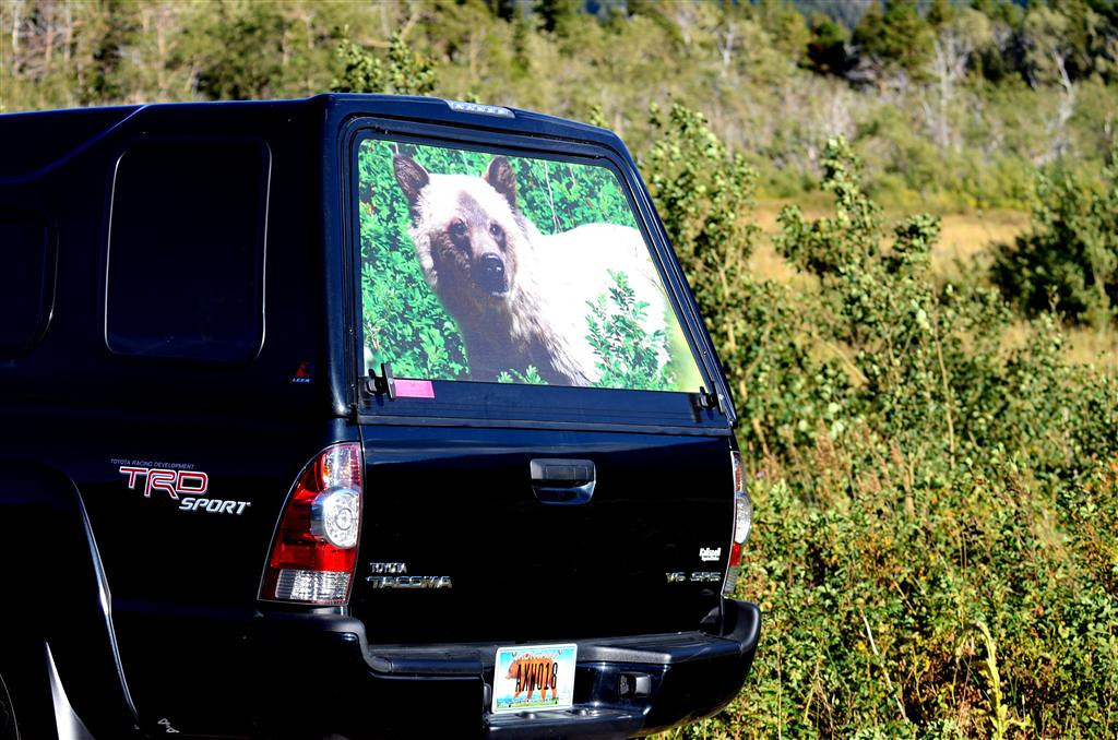 August 28<br /> <br /> A fellow bear watcher equipped with bear personalized tag and graphics.