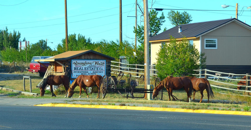 September 3<br /> <br /> Arrive at Browning, Montana. Horses are loose at the busiest intersection in town. It is also sad to see stray dogs wandering the streets everywhere.