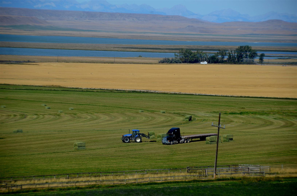 September 3<br /> <br /> Outside Choteau, I stop to take this picture of the hay gathering. The tractor moves frantically back and forth across the field to load the truck. I suspect he is paying the trucker by the hour.