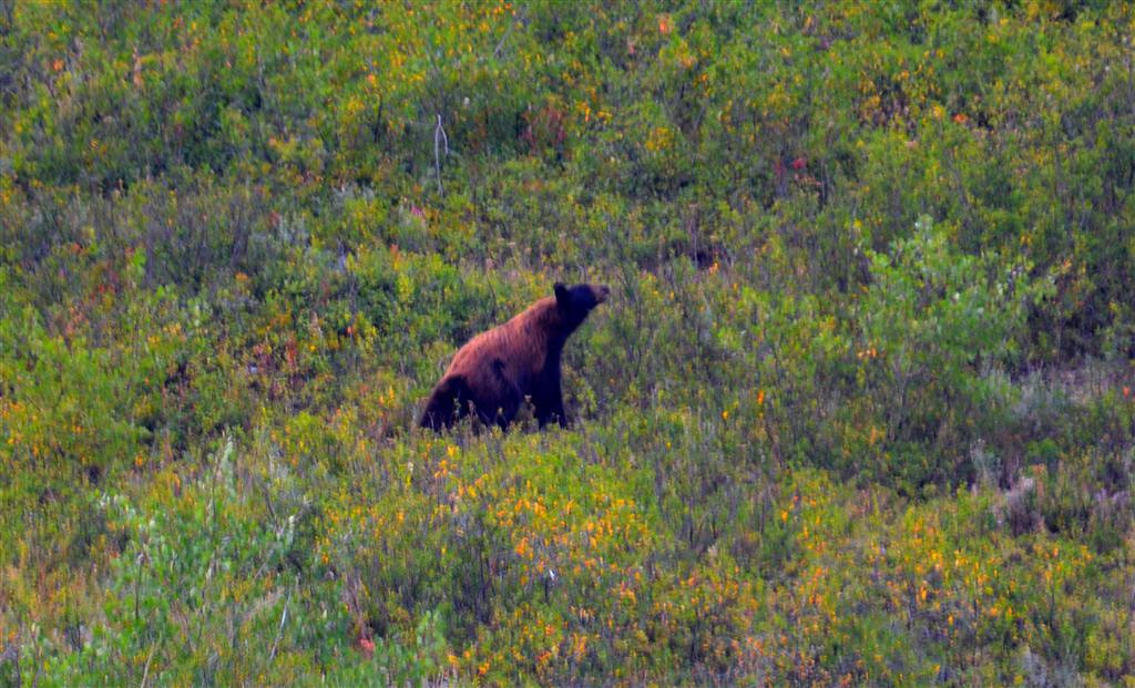 August 28<br /> <br /> Black bear sow.