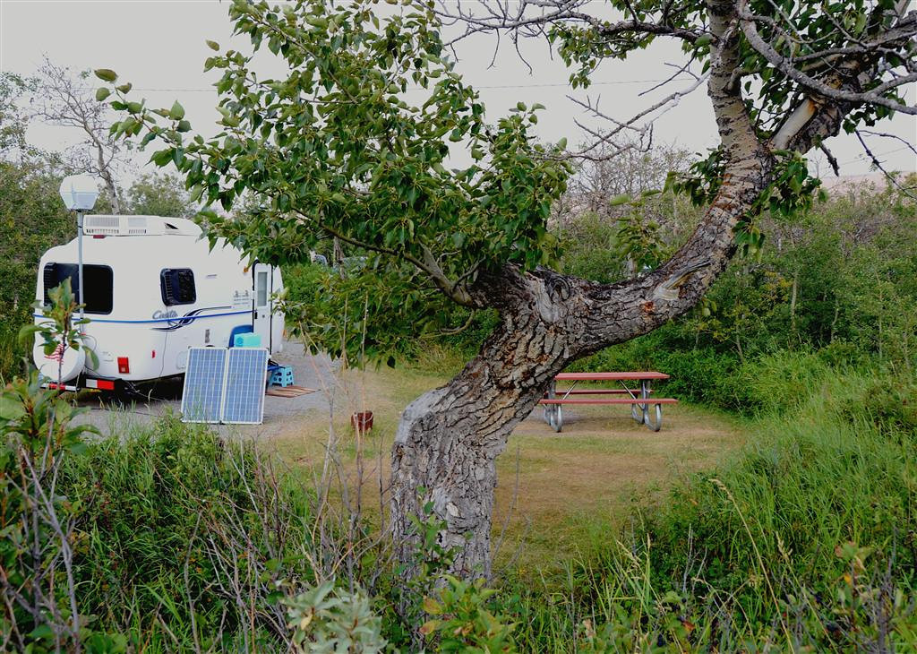 "August 21.<br /> <br /> The lady ranger at St Mary Campground had told me she had a good spot for me with a ""gnarly tree"" .<br /> <br /> They really know their campsites. <br /> <br /> I tell her I want one where the bears show up around 5:30PM for photos. She tells me I need to go to Many Glacier Campground for that."