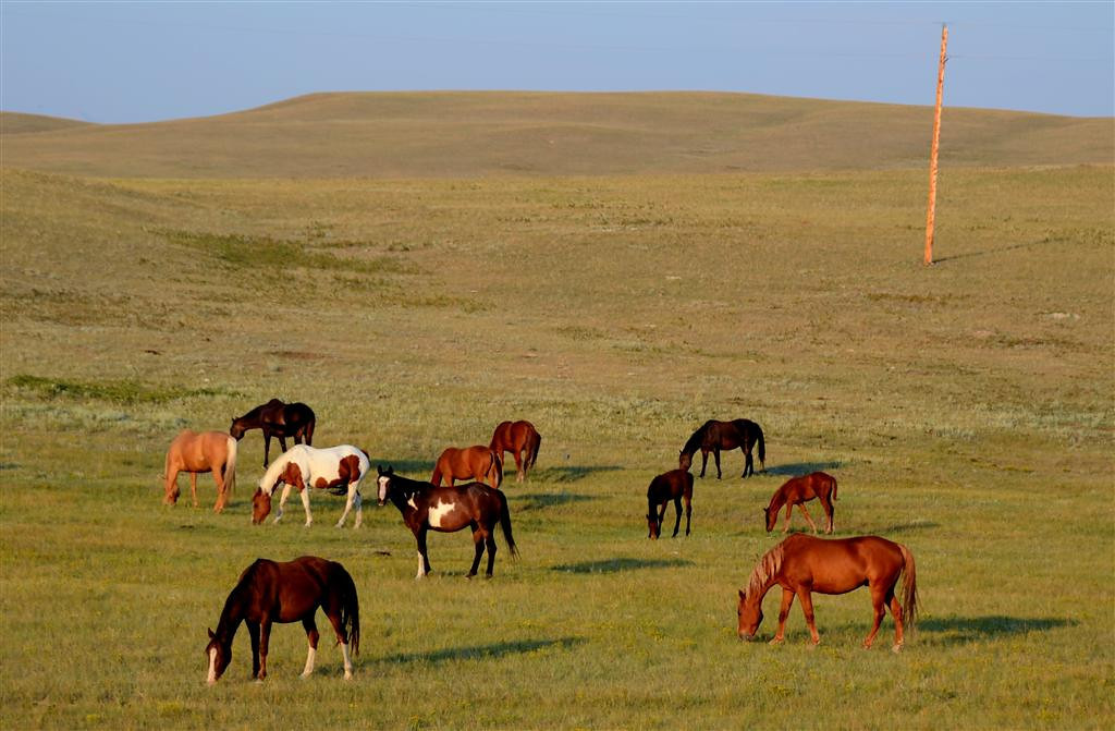 August 21<br /> <br /> Horses seem very at home here. The Blackfeet Indians own some very fine animals in the area.