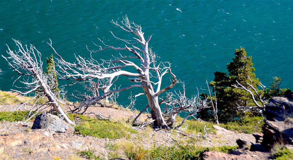 August 23<br /> <br /> Weathered trees at Sun Point are evidence of the severe weather there.