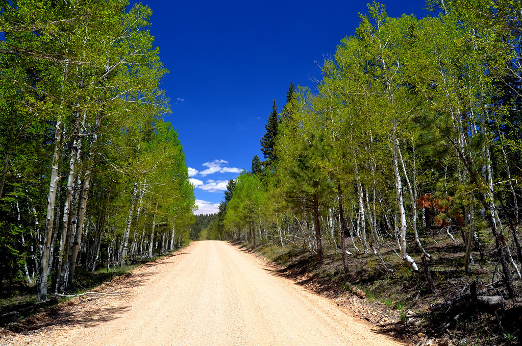 Roads in  Kaibab are lined with aspen, fir, and ponderosa pines. This is Forest Rd 22, one of the best. You want to stay on the main roads as much as possible.