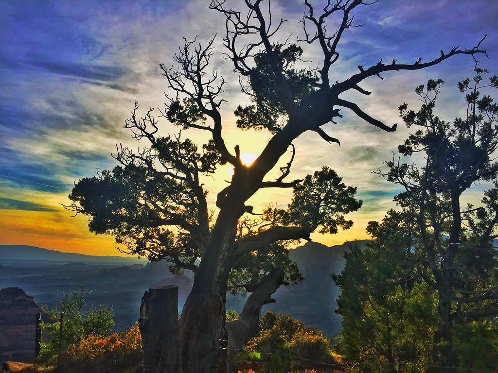 """High atop Schnebly Hill Trail, a stately juniper tree overlooks Sedona far below. Such trees can be hundreds of years old. <br /> """"The fire. The odor of burning juniper is the sweetest fragrance on the face of the earth, in my honest judgment; I doubt if all the smoking censers of Dante's paradise could equal it. One breath of juniper smoke, like the perfume of sagebrush after rain, evokes in magical catalysis, like certain music, the space and light and clarity and piercing strangeness of the American West. Long may it burn.""""<br /> Edward Abbey, Desert Solitaire"""