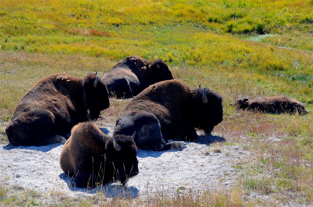 September 8<br /> <br /> Just hanging at the wallow..........