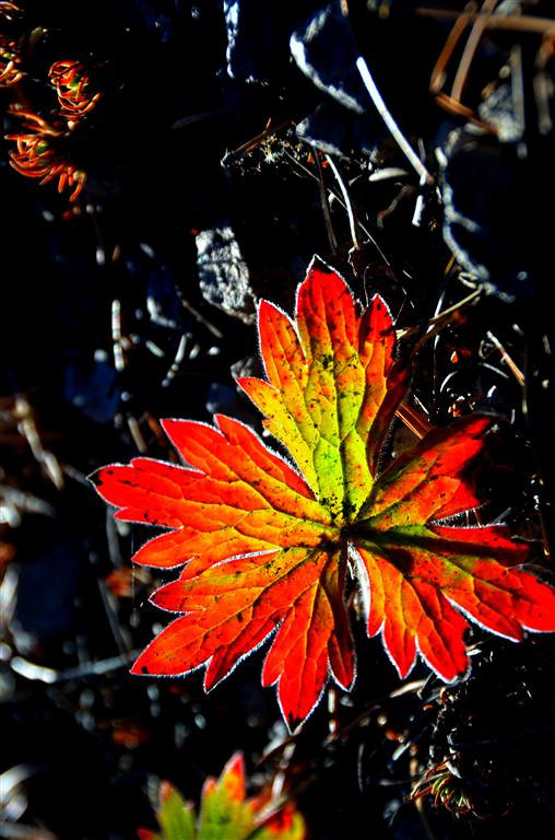September 8<br /> <br /> It is starting to get cold here and some of the leaves reflect the change.
