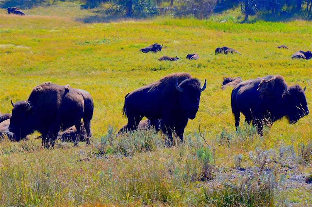 September 8<br /> <br /> Three kings of the herd.