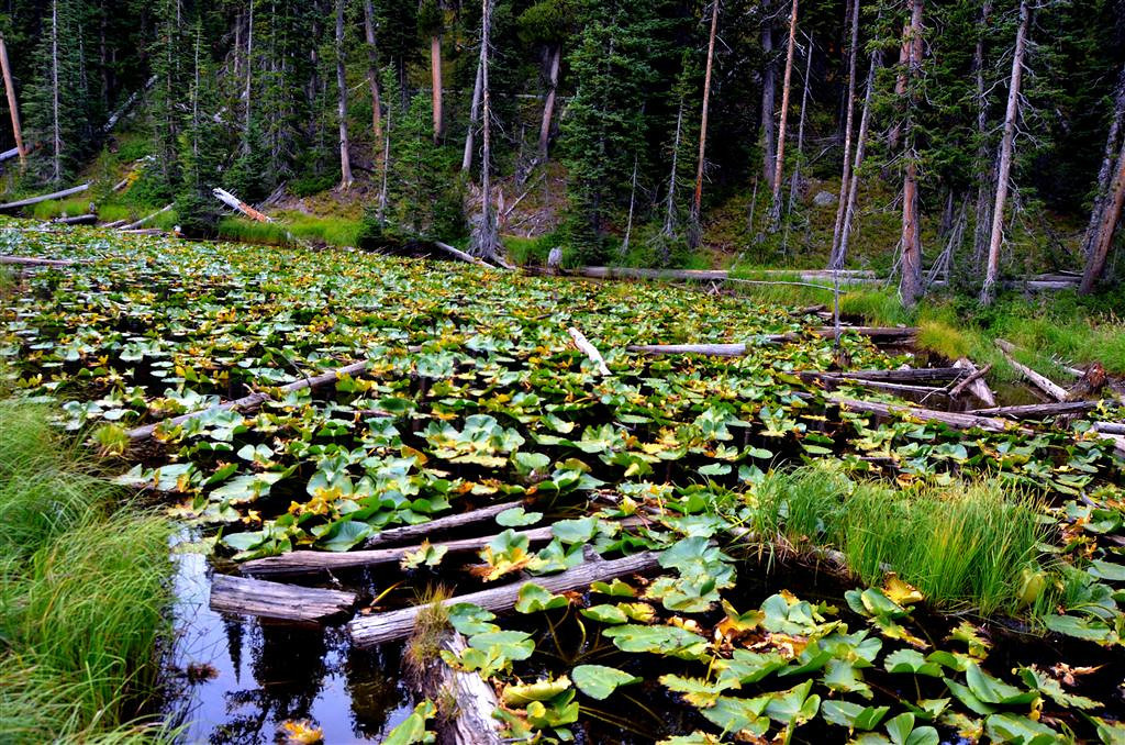 September 6<br /> <br /> This pond at the continental divide has two outlets that feed two different oceans.