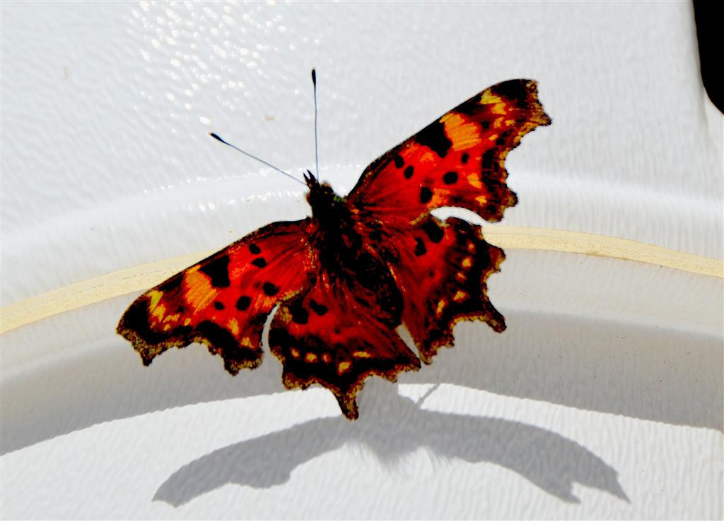 September 7<br /> <br /> Butterfly warms up on Casita.