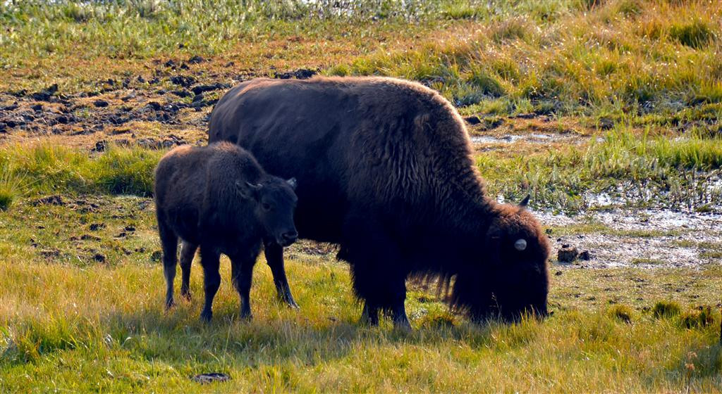 September 5<br /> <br /> Yellowstone National Park