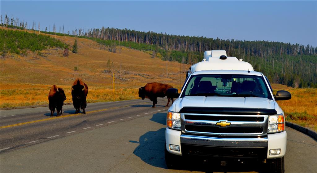 September 5<br /> <br /> Yellowstone National Park<br /> <br /> I pull over in a mountain meadow to observe a huge herd of bison.
