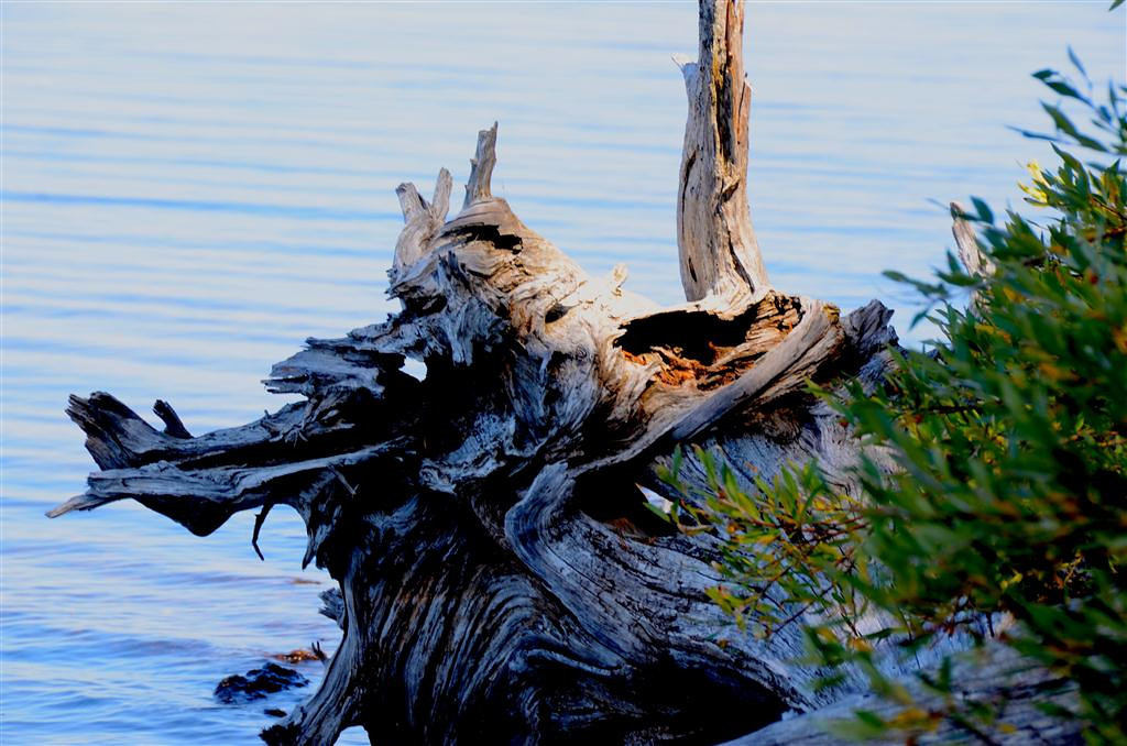 September 8<br /> <br /> Today was a leisure day for me. I fished the Yellowstone River and Yellowstone Lake with no success but I sure enjoyed the scenery.<br /> <br /> Driftwood along the shore is always of interest.