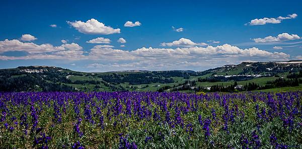Skyline Wildflowers