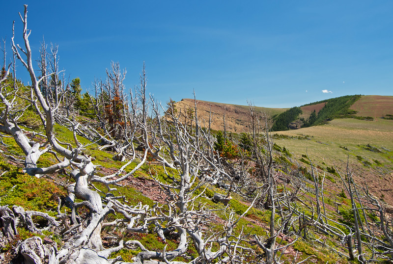 While winds were calm on this day, the forest of dead and stunted trees testify to the harsh environment here.