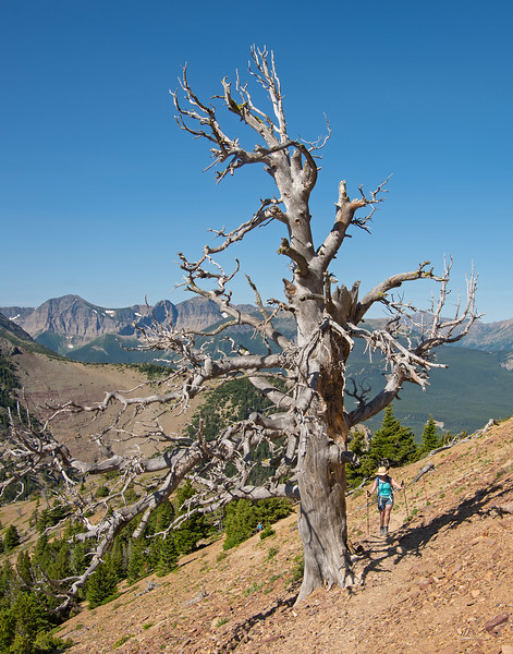 After a steep rocky climb to treeline, the grade relents for the final stretch to the lower summit.