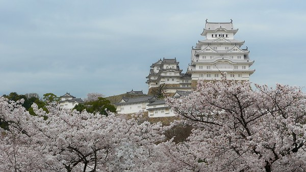 Himeji Castle 姫路城と桜