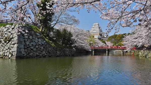 Moated Castle in Spring  /   Himeji Castle 姫路城