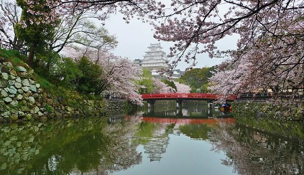 Moated Castle in spring -Himeji castle 姫路城