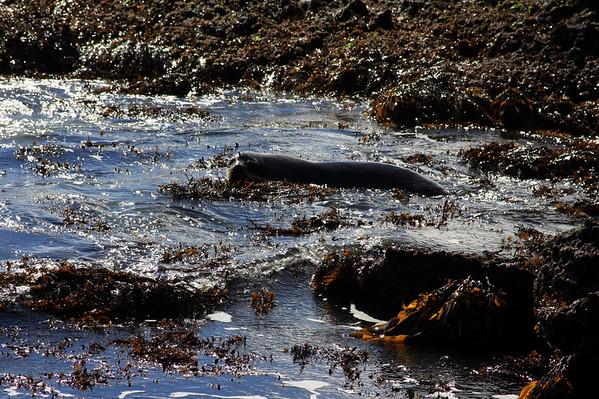 Seals 072.jpg