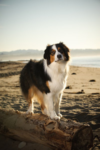 7579-d700_Amy_and_Michael_Savage_Capitola_Beach_Portrait_Photography