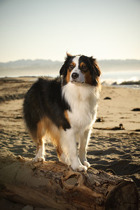 7576-d700_Amy_and_Michael_Savage_Capitola_Beach_Portrait_Photography
