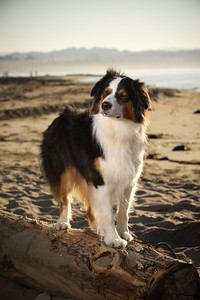 7583-d700_Amy_and_Michael_Savage_Capitola_Beach_Portrait_Photography