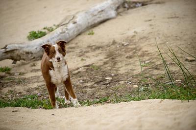 5555_d800b_Marianne_Mike_Coda_Four_Mile_Beach_Santa_Cruz_Family_Pet_Photography