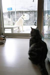 下午就喜歡這樣曬太陽看門外,一有客人進來必定喵個幾聲,真是稱職的店貓