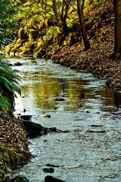 Streams & Trees Behold Their Eternal Joy