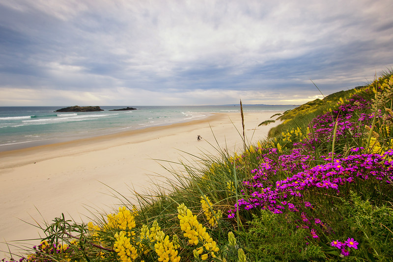 Smails Beach With Flowers