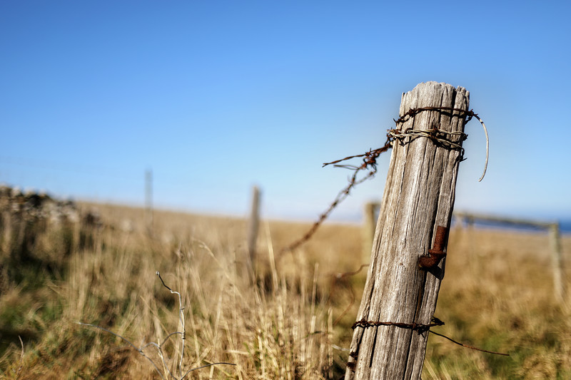 Old Fence Post in Long Grass