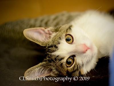 Stretchy Kitten