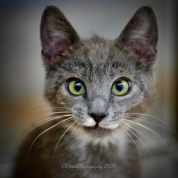 Goofy Kitten!