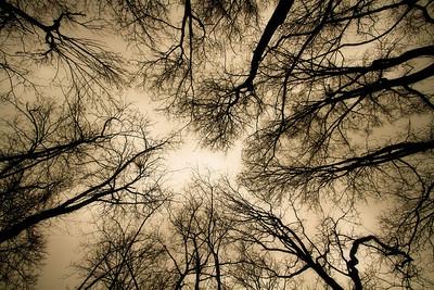 Looking up through the trees in Cat Island NWR in St. Francisville, Louisiana (warm color temp)