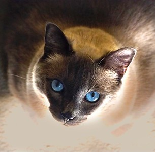 Gaze into Turk's blue eyes and your heart will melt.