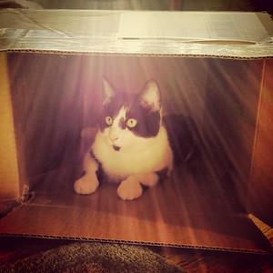 Cat Town Meetings