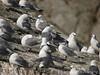 Seagulls! Kenai Fjords near Seward Alaska