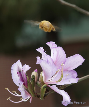 Bee flying over purple flower