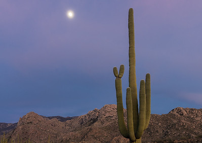 Saguaro and moon.