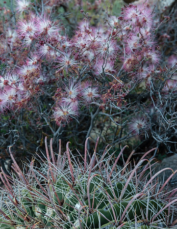 Catalina Park, Arizona