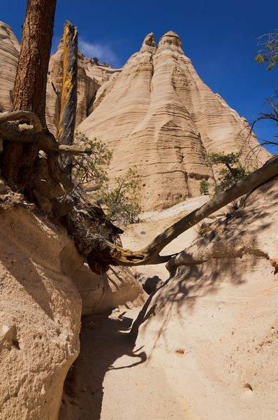 Tent Rocks Tree Block