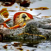 Otter Waking Up 2